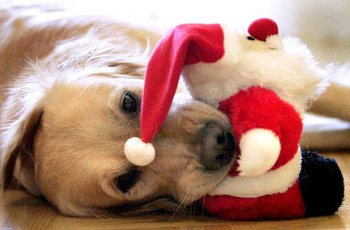 Der Deutsche Tierschutzbund rät davon ab, Tiere als Weihnachtsgeschenk zu wählen.  Foto: dpa