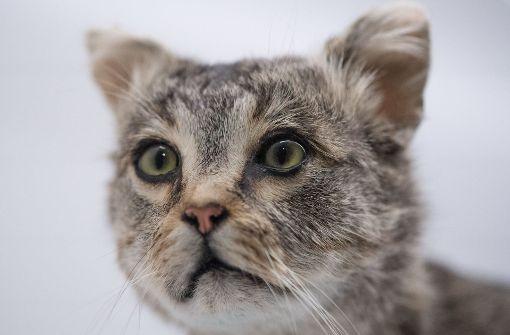 Katze tagelang in Bahnhofsschließfach eingesperrt