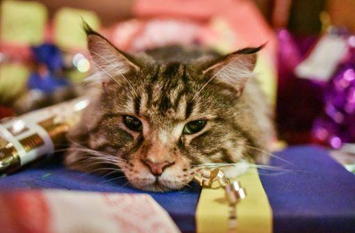 Katzenquäler: Peta lobt Belohnung aus