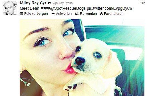 Miley Cyrus hat einen neuen Hund