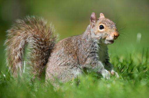 Hobby-Jäger stirbt nach Verzehr von Eichhörnchen