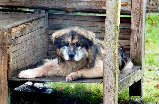 Hundemischling Lucky ist der Alterspräsident