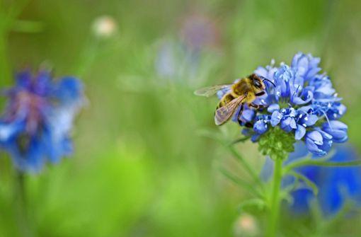 Wo ist Platz für das Bienchen?
