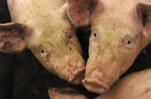 Tierschützer werfen Behörden Versagen vor
