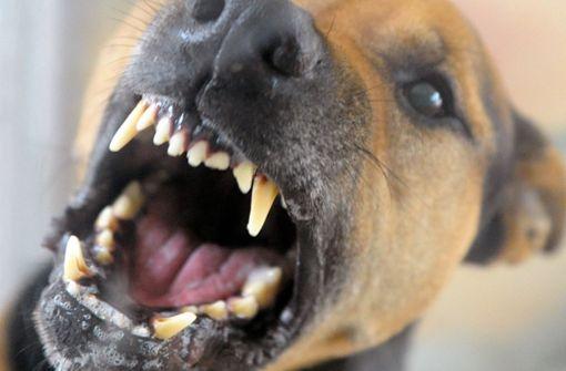 Mann muss nach Hundeattacke auf Familie ins Gefängnis
