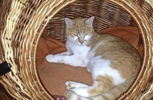 Peta bietet 1000 Euro für Hinweise zum Katzentreter