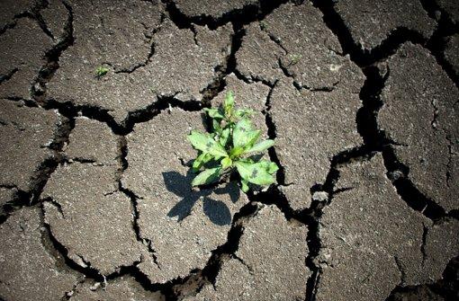 Die Verhandlungen beim Klimagipfel sind noch ein zartes Pflänzchen. Foto: dpa