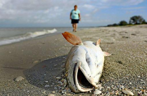 Der Strand wird zur Todeszone