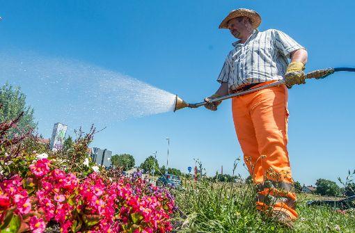 Hitze bringt Gefahren für Mensch und Wald