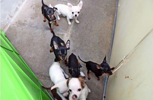 Hundewelpen können auf eine glückliche Zukunft hoffen