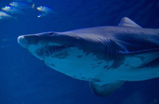 Hai attackiert 24-jährigen Surfer