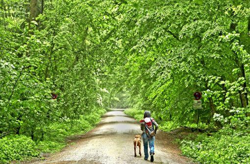 Auf dem Spaziergang sollten Hunde im Wald an der Leine bleiben. Foto: dpa