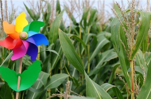 Biogasanlagen sollen keinen Mais mehr verwerten