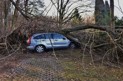 Bäume begraben Autos unter sich