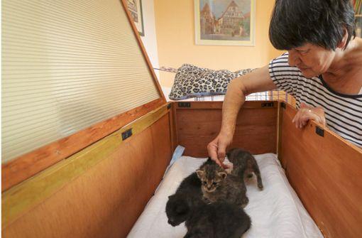 Jutta Framenau ist die Vorsitzende des Vereins Katzenfreunde Bietigheim-Bissingen. Foto: factum/Granville