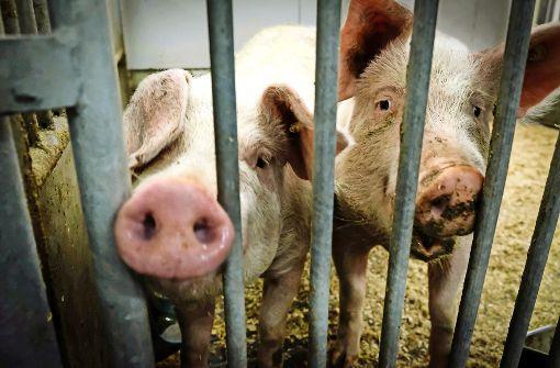 Wer weiß schon, was Schweine wollen?