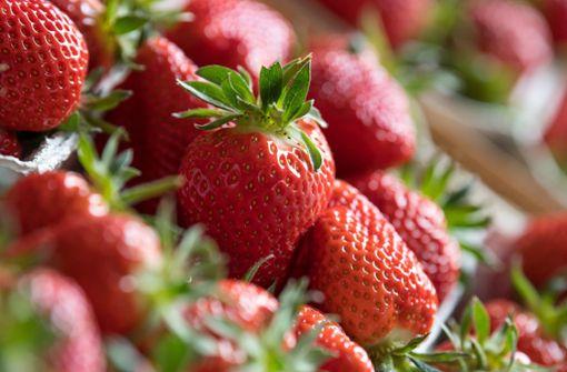 Erdbeeren sind wahre Vitaminbomben. Die süßen Früchtchen enthalten mehr Vitamin C als Zitronen oder Orangen, sie haben viel Folsäure und mit Kalzium, Kalium, Eisen, Zink und Kupfer jede Menge  Mineralstoffe. Wer die Erdbeeren auch noch selbst erntet, bevor er sie verspeist, bekommt obendrein noch Bewegung – und lebt gleich doppelt gesund.  Foto: dpa-Zentralbild