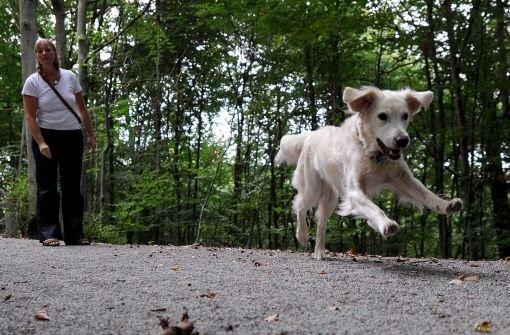 Unbekannte Hundehasser haben in Vaihingen an der Enz Giftköder ausgelegt. Am Montag starb ein zweijähriger Mischling. (Symbolbild) Foto: dpa