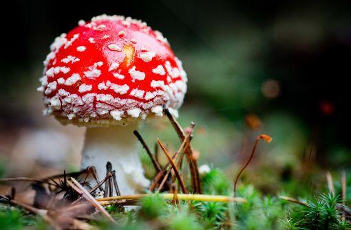 Was wissen Sie über Pilze?
