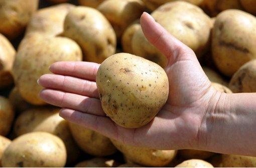 Verdacht gegen Kartoffel-Verarbeiter