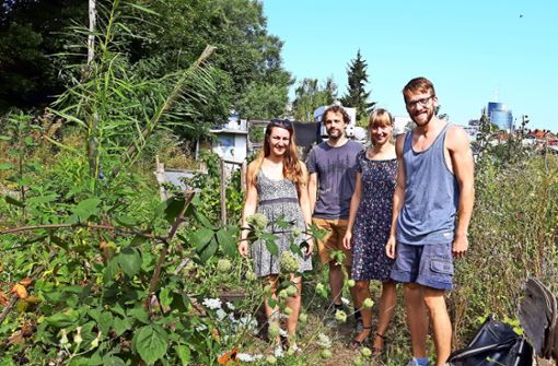 Gärtnern auf Zeit in der Gemeinschaft