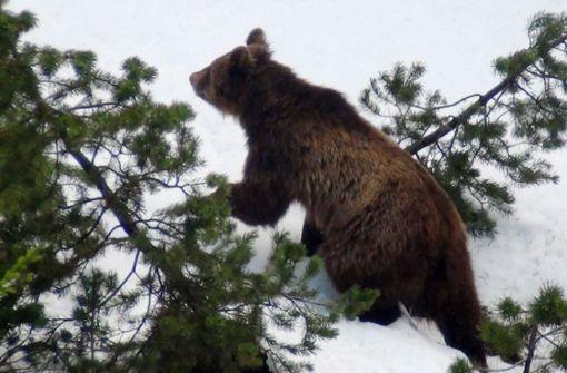 Video von Bärenkind sorgt für Kontroverse
