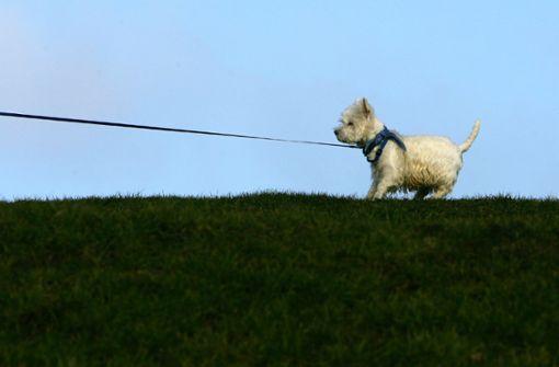 Der Entscheidungsträger läuft am anderen Ende der Hundeleine. Foto: dpa