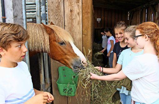 Degerlocher Kinder besuchen glückliche Pferde