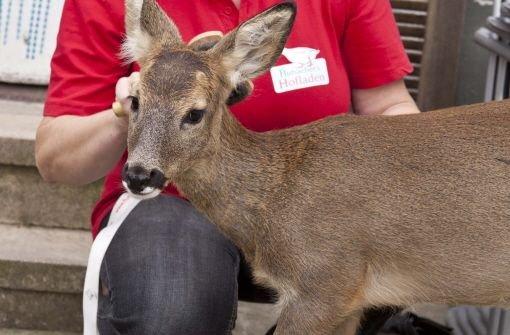 Das Bambi vom Kaiserstuhl