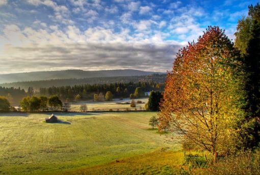 Herbstimpression Albtal im Nördlichen Schwarzwald  Foto: Tourismus GmbH Nördlicher Schwarzwald