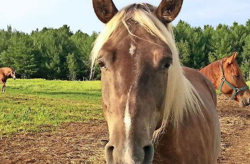 Wieder Pferdeschänder unterwegs