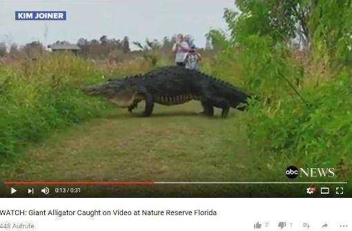 Tropical Island Beach Ambience Sound: Wie Ein Dinosaurier: Riesenalligator In Florida Gesichtet