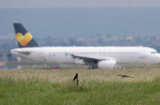 Milliardenschäden für Airlines durch Vogelschläge