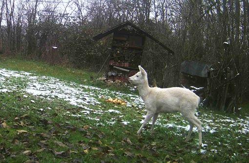 Das weiße Reh als Thema auf dem Weihnachtsmarkt