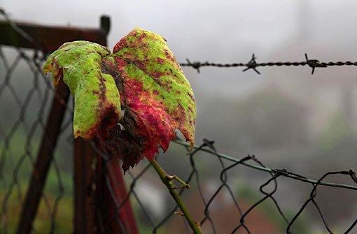 Der November ist bislang viel zu warm. Foto: Leserfotograf bdslucky48