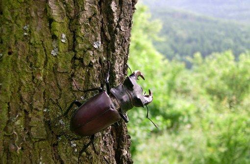 Seltenes Insekt lebt auf teuren Baugrundstück
