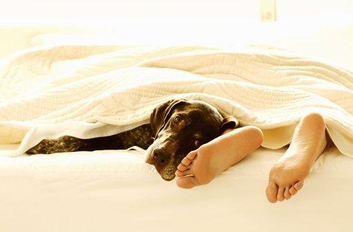 f nf gr nde warum haustiere nicht im bett schlafen sollten geh ren hund und katze in die. Black Bedroom Furniture Sets. Home Design Ideas