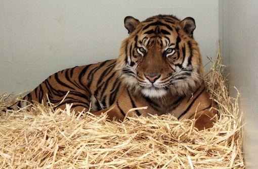 Tiger tötet Frau in der Nähe ihres Hauses