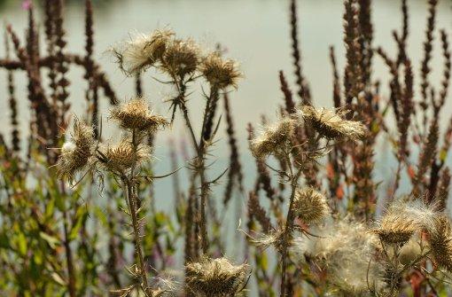 Auch wenn das Wetter im Herbst manchmal etwas trüb sein kann, hat diese Jahreszeit ihre schönen Seiten. Foto: Leserfotograf andy1955