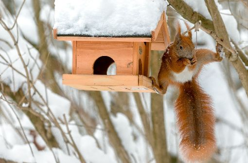 tiere brauchen tiere im winter hilfe web wissen stuttgarter nachrichten. Black Bedroom Furniture Sets. Home Design Ideas