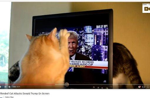 Diese Tiere hassen Donald Trump