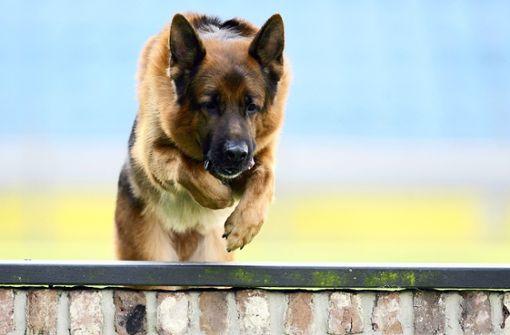 Schäferhund nach Angriff auf Frauchen erschossen