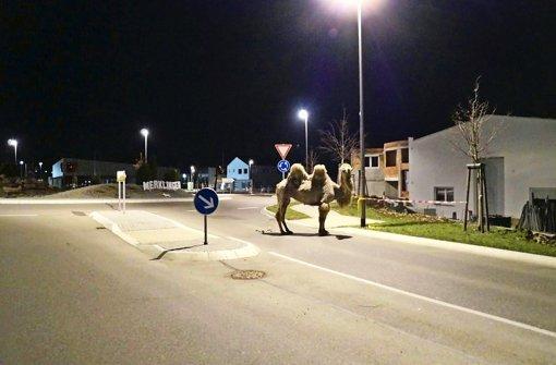 Zirkus muss Polizei 1800 Euro zahlen