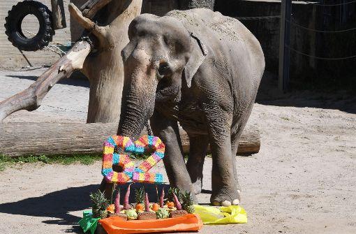 Deutschlands ältester Elefant wird 62