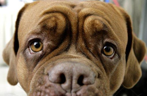 Zwei Hunde in Neuffen haben Giftköder gefressen. Foto: dpa/Symbolbild