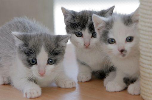 Tierheim soll Katzen im Kühlschrank eingefroren und getötet haben