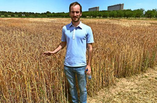 Dinkelfelder mitten in Stuttgart: Der Doktorand Matthias Rapp forscht in Hohenheim zu Urgetreideformen. Foto: Julia Bosch