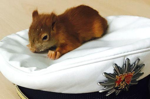 Polizei rettet Baby-Eichhörnchen