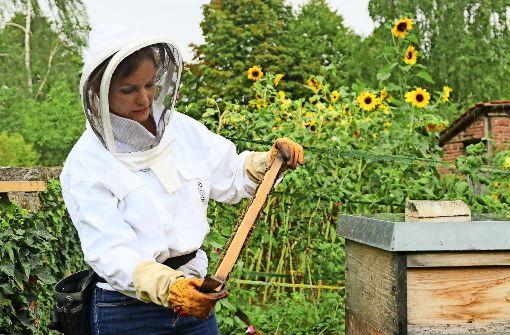 Eine Biene allein macht noch keinen Honig