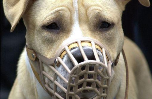Sieben Fakten über gefährliche Hunde